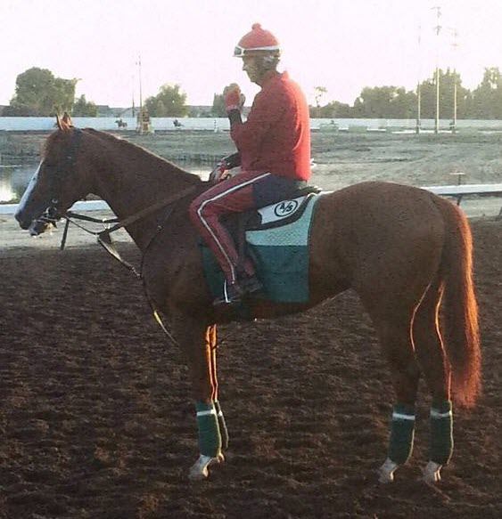 California Chrome Conformation