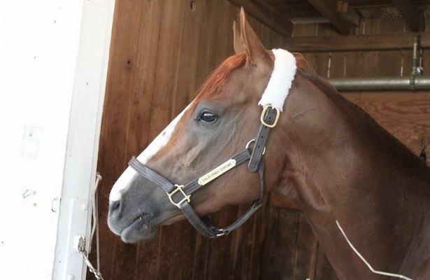 California Chrome in his stall at Churchill Downs