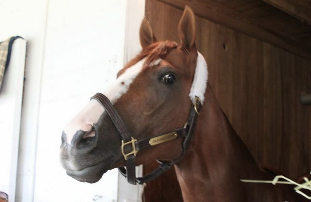 California Chrome in his stall