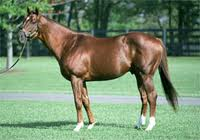 Zaikov sire Distorted Humor