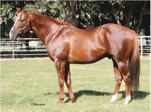 California Chrome sire Lucky Pulpit