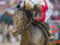 Orb, Kentucky Derby 2013 winner