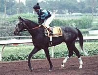 Spectacular Bid on the track prior to a race