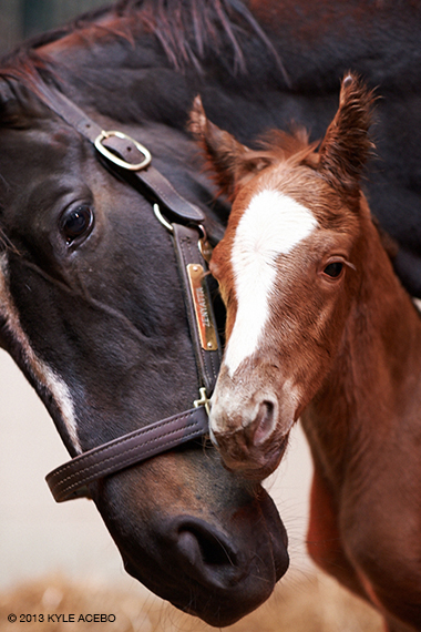 Zenyatta and her 2013 foal