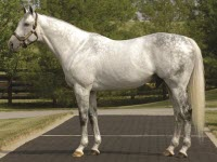 Unbridled's Song - Will Take Charge Sire