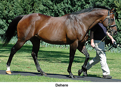 Dehere - Will Take Charge Damsire