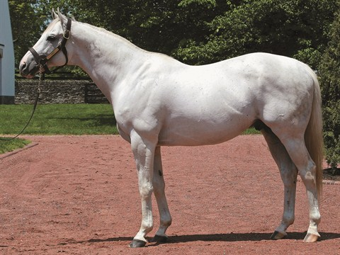 Flashback_sire_Tapit