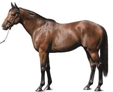 Wicked Strong sire Hard Spun