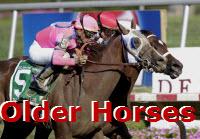 Older Horses