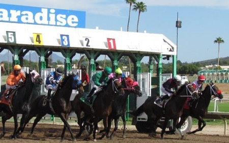 Turf Paradise Picks & Tips